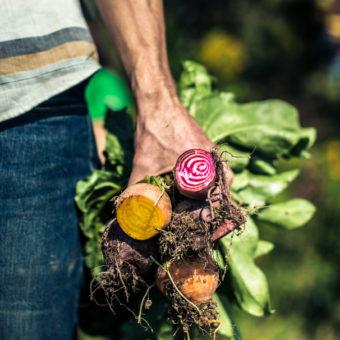 WEGMAN'S ORGANIC FARM : CANANDAIGUA, NY : EDITORIAL PHOTOGRAPHY BY TOMAS FLINT