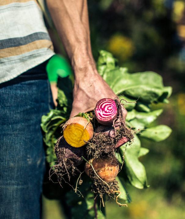 Editorial Photography : Wegman's Organic Farm - Canandaigua, NY : POST Magazine : tomas flint